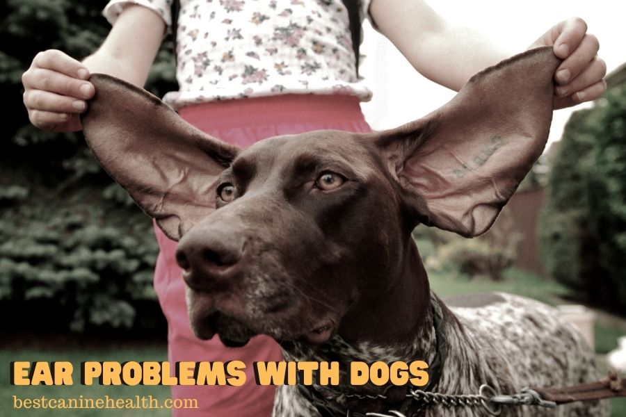 Ear Problems with Dogs