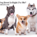 Which Dog Breed Is Right For Me
