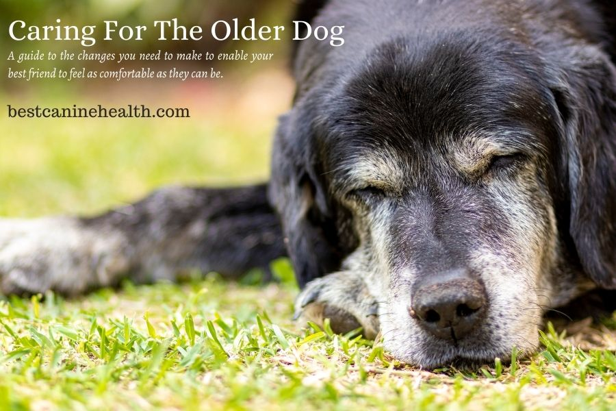 Caring For The Older Dog
