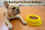 What Is The best Food For A French Bulldog