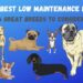 What Are The Best Low Maintenance Dogs?