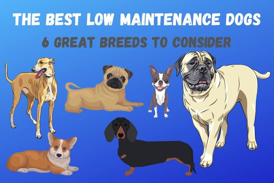 The Best Low Maintenance Dogs