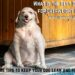 Whаt іѕ thе Best Dog Food for Overweight Dogs?