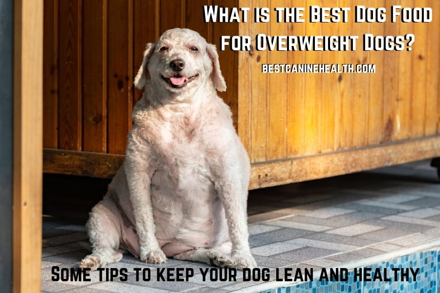 Whаt іѕ thе Best Dog Food for Overweight Dogs