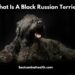 What Is A Black Russian Terrier?