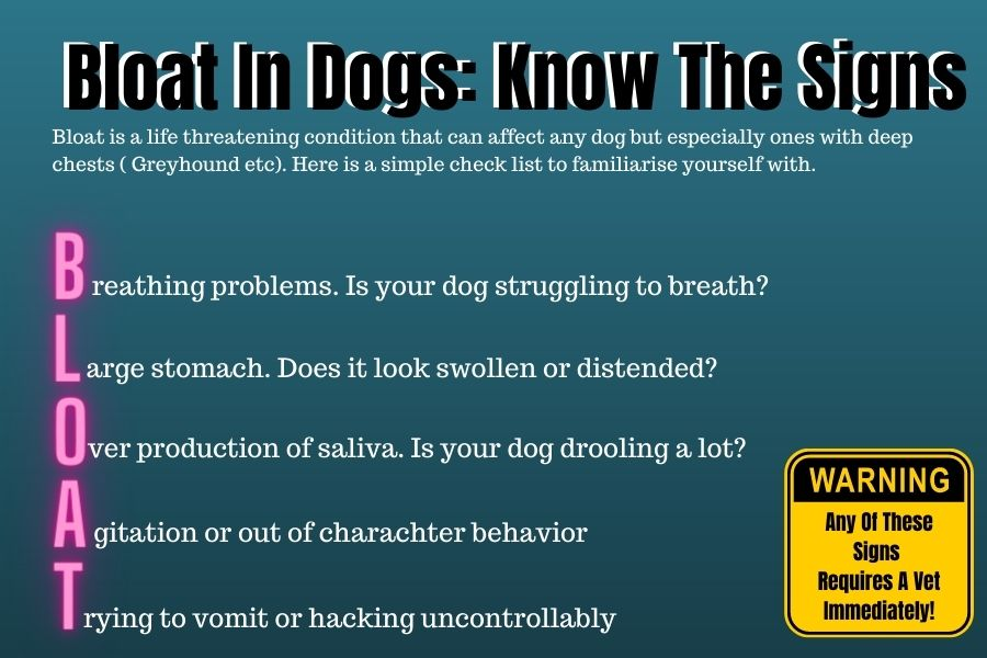 What Is Bloat In Dogs