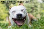 What Is Kennel Cough In Dogs?