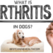What Is Arthritis In Dogs?