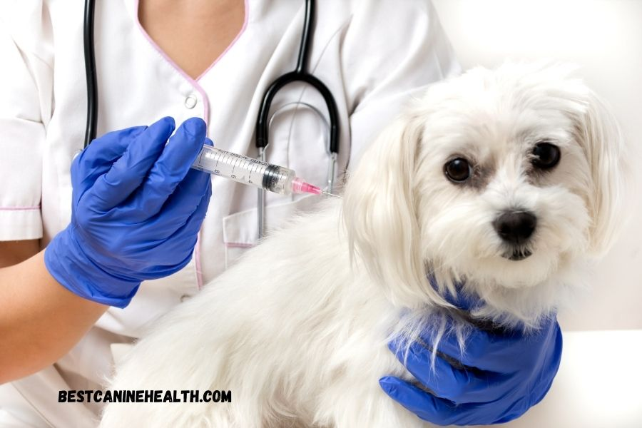 What Is Canine Distemper