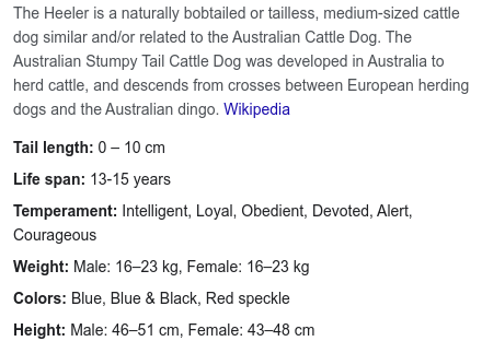 What Is An Australian Stumpy Tail Cattle Dog