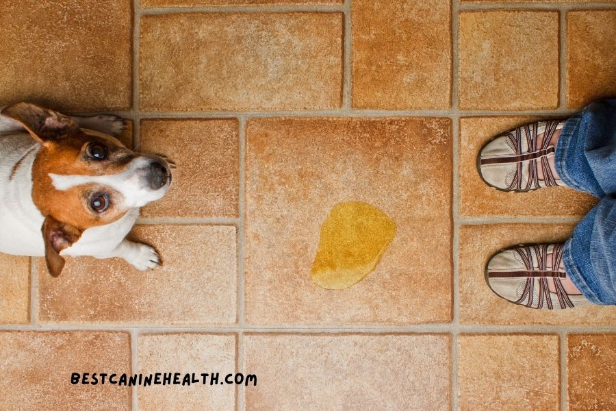 Best Urine Remover For Dogs