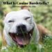 What Is Canine Bordetella?