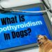 What Is Hypothyroidism In Dogs?
