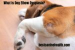 What Is Dog Elbow Dysplasia?