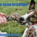 What Is Canine Enrichment?