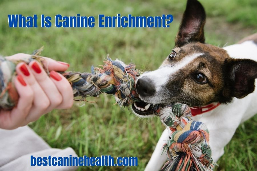What Is Canine Enrichment