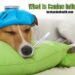 What Is Canine Influenza?