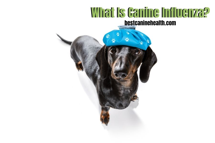 What Is Canine Influenza