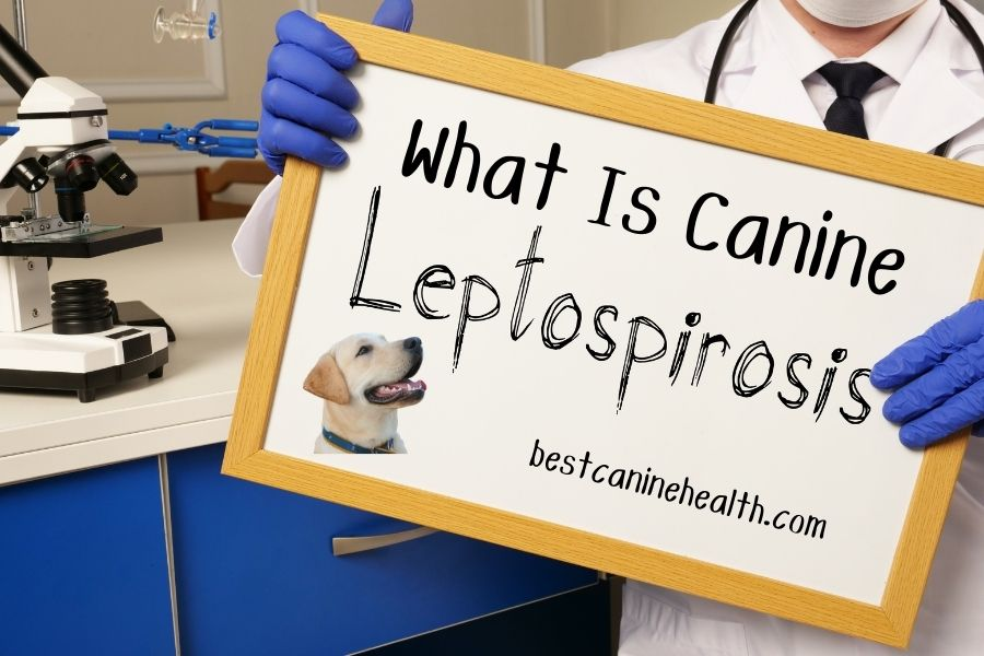 What Is Canine Leptospirosis