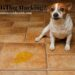 What Is Dog Marking?