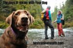 The Joys Of Hiking With Your Dog