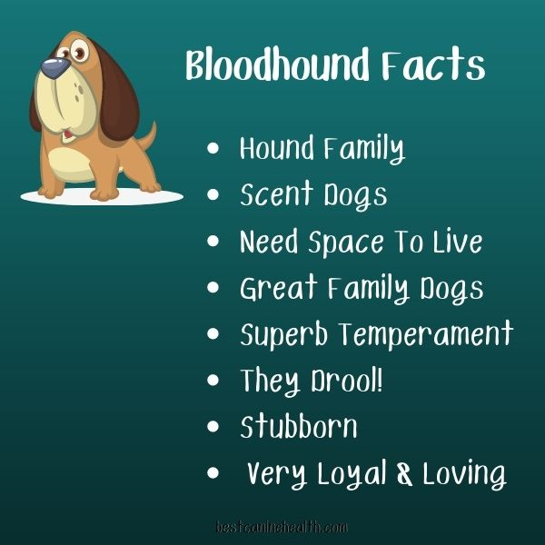 What Is A Bloodhound