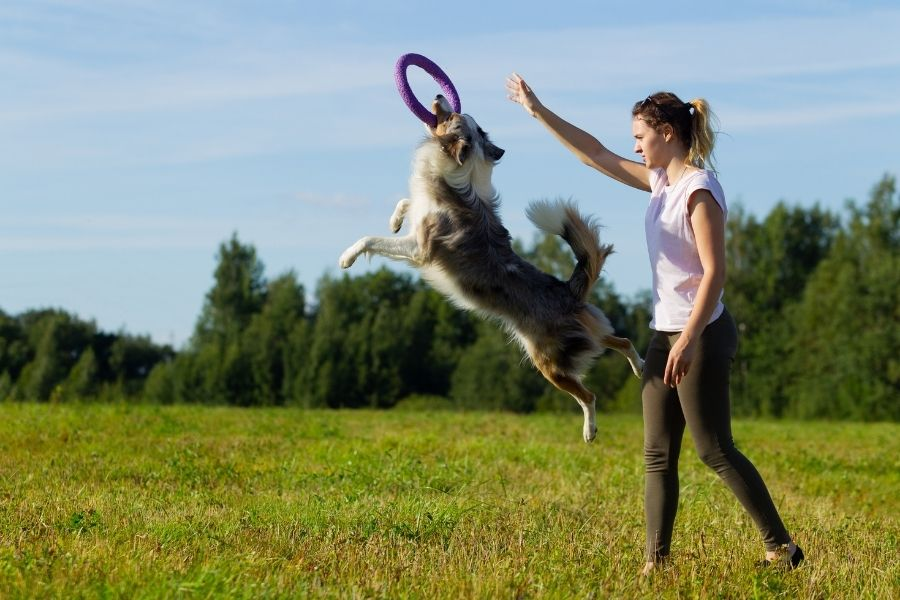 What Is A Border Collie?