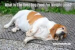 What Is The Best Dog Food For Weight Loss