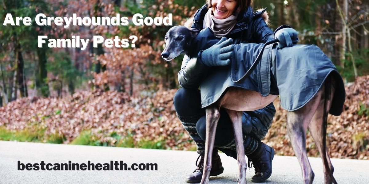Are Greyhounds Good Family Pets