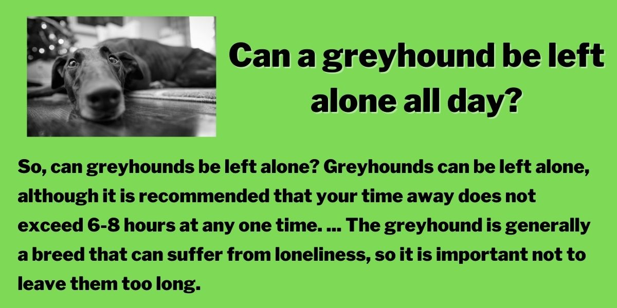 Can a greyhound be left alone all day