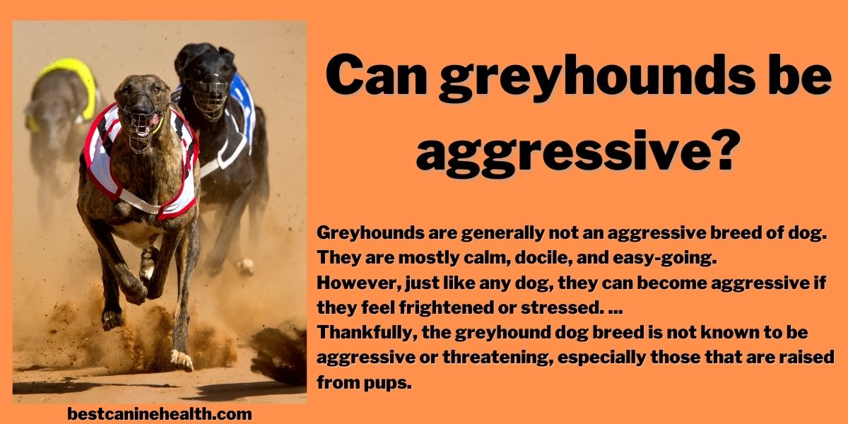 Can greyhounds be aggressive