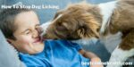 How To Stop Dog Licking