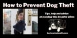 How to Prevent Dog Theft