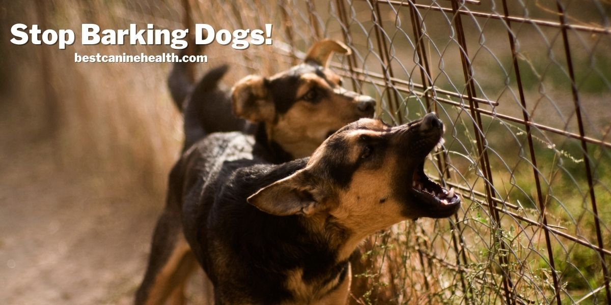 Stop Barking Dogs