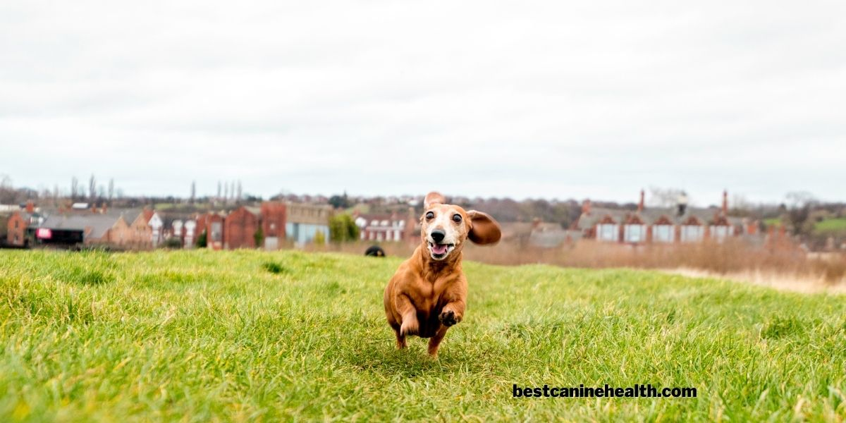 What Are The Benefits Of Using A Dog Exercise Pen