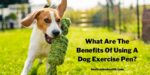 What Are The Benefits Of Using A Dog Exercise Pen?