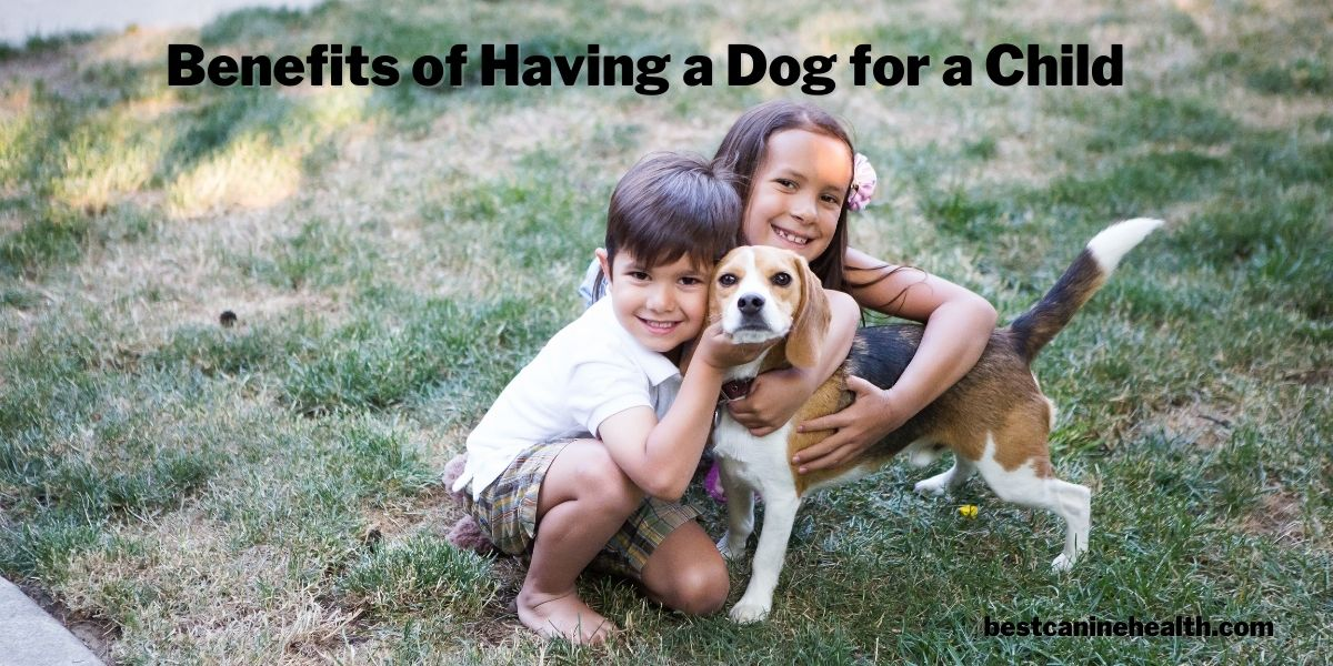 Benefits of Having a Dog for a Child