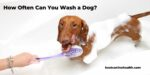 How Often Can You Wash a Dog