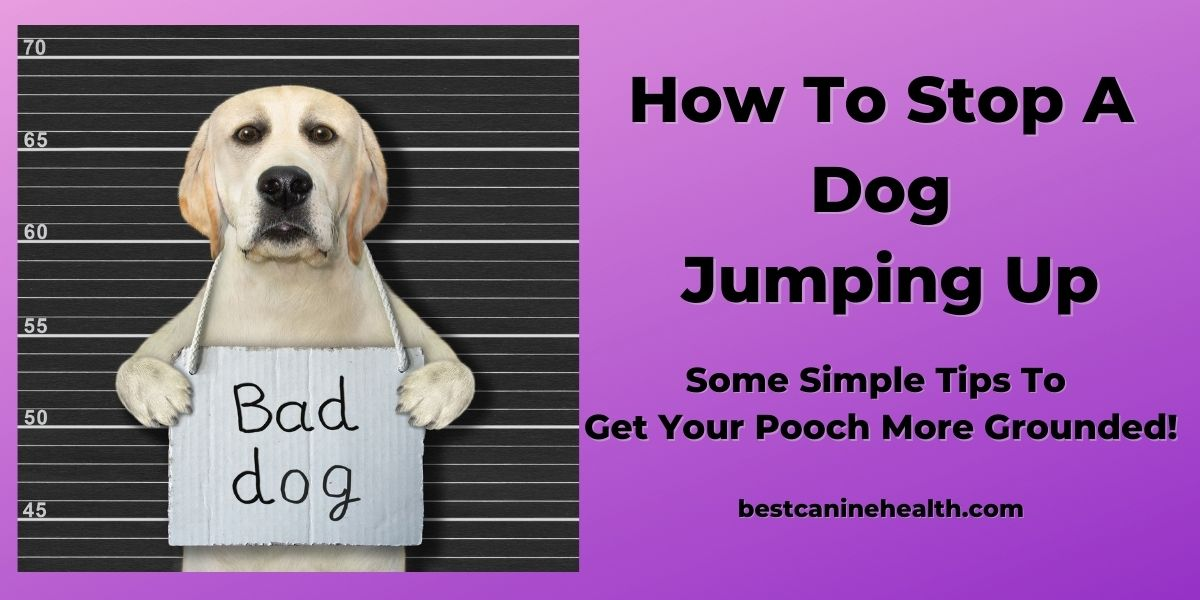 How To Stop A Dog Jumping Up