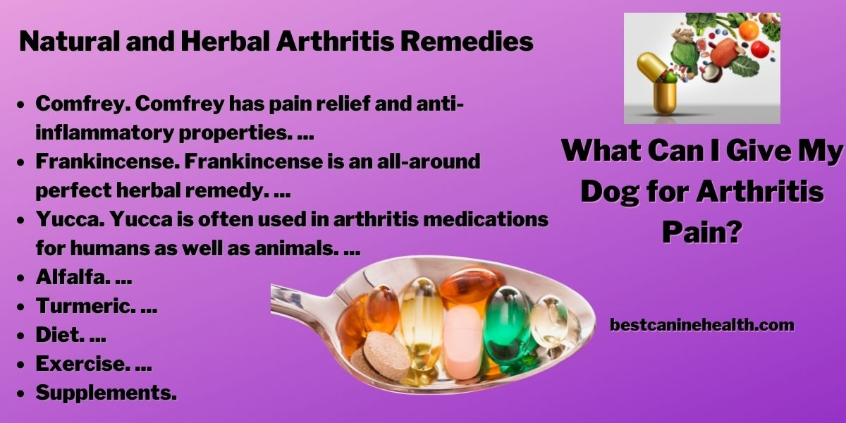 What Can I Give My Dog for Arthritis Pain