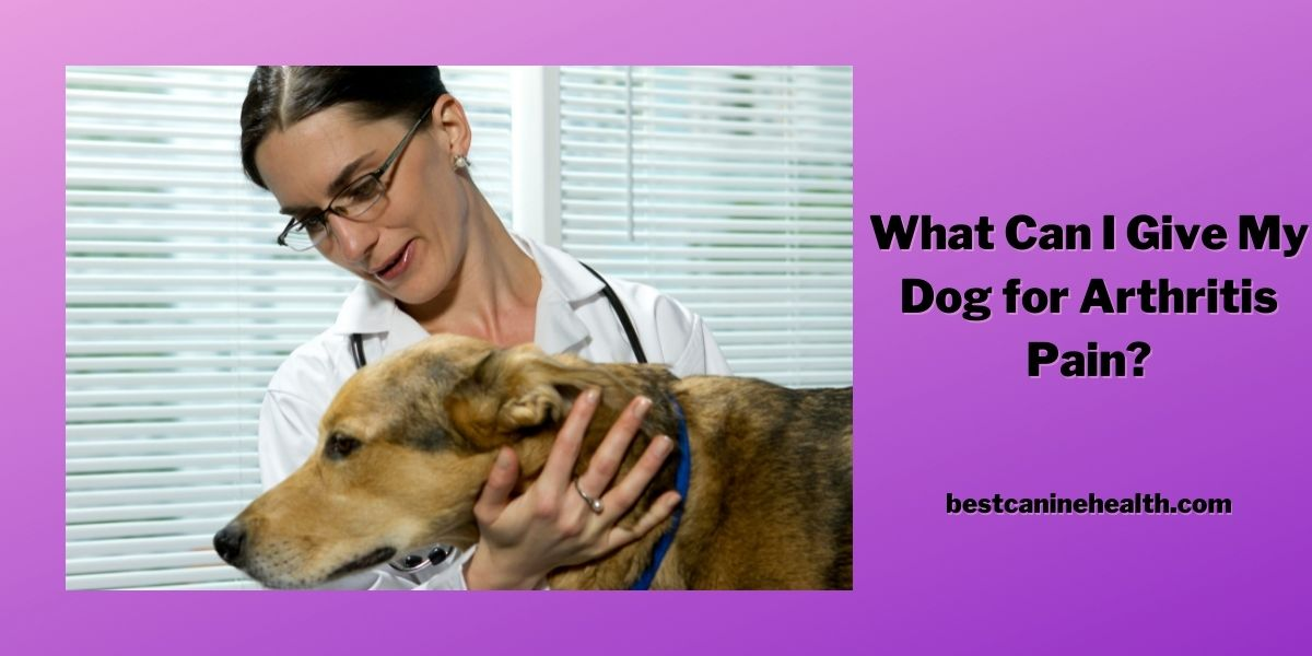 What Can I Give My Dog for Arthritis Pain?