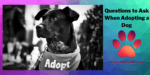 Questions to Ask When Adopting a Dog