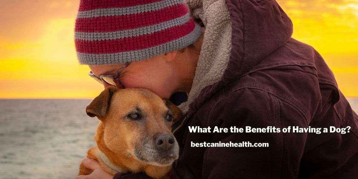 What Are the Benefits of Having a Dog?